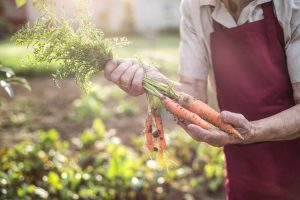 woman holding carrots from her garden